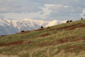Bison Range 3