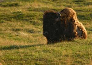 Bison Range 4