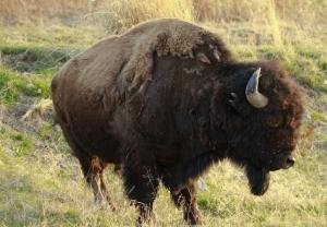 Bison Range 5