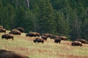 Bison Range 6